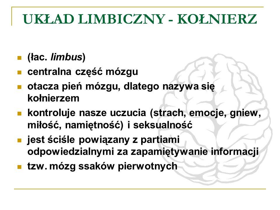 UKŁAD LIMBICZNY - KOŁNIERZ (łac. limbus) centralna część mózgu otacza pień mózgu, dlatego nazywa się kołnierzem kontroluje nasze uczucia (strach, emoc