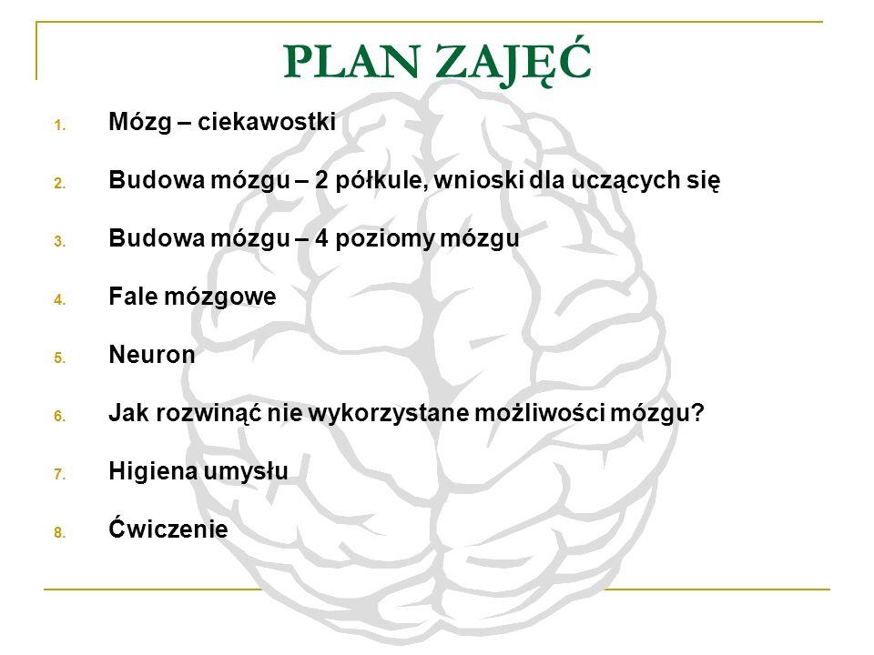 PLAN ZAJĘĆ 1. Mózg – ciekawostki 2. Budowa mózgu – 2 półkule, wnioski dla uczących się 3. Budowa mózgu – 4 poziomy mózgu 4. Fale mózgowe 5. Neuron 6.
