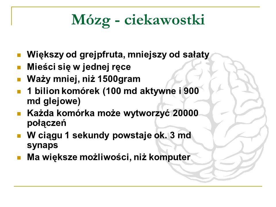 Mózg - ciekawostki Większy od grejpfruta, mniejszy od sałaty Mieści się w jednej ręce Waży mniej, niż 1500gram 1 bilion komórek (100 md aktywne i 900