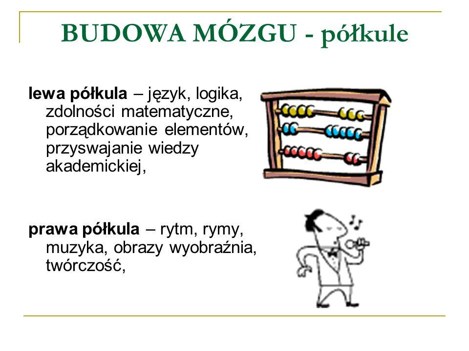 BUDOWA MÓZGU - półkule lewa półkula – język, logika, zdolności matematyczne, porządkowanie elementów, przyswajanie wiedzy akademickiej, prawa półkula