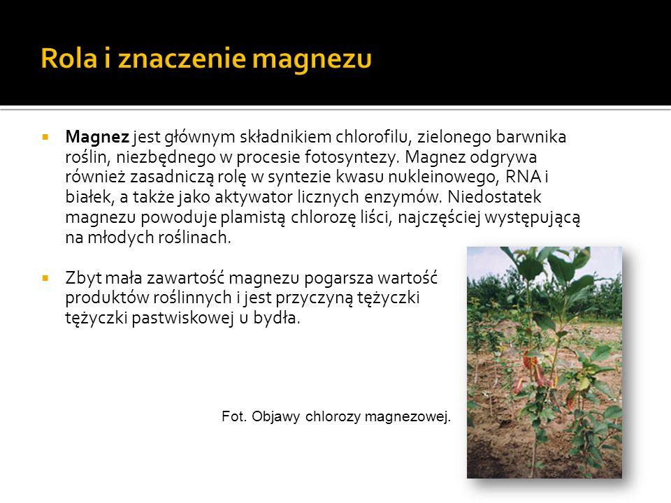 Magnez jest głównym składnikiem chlorofilu, zielonego barwnika roślin, niezbędnego w procesie fotosyntezy. Magnez odgrywa również zasadniczą rolę w sy