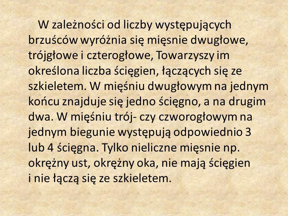 Bibliografia dr Enric Gil, Atlas Anatomii, Warszawa 1991, wyd.
