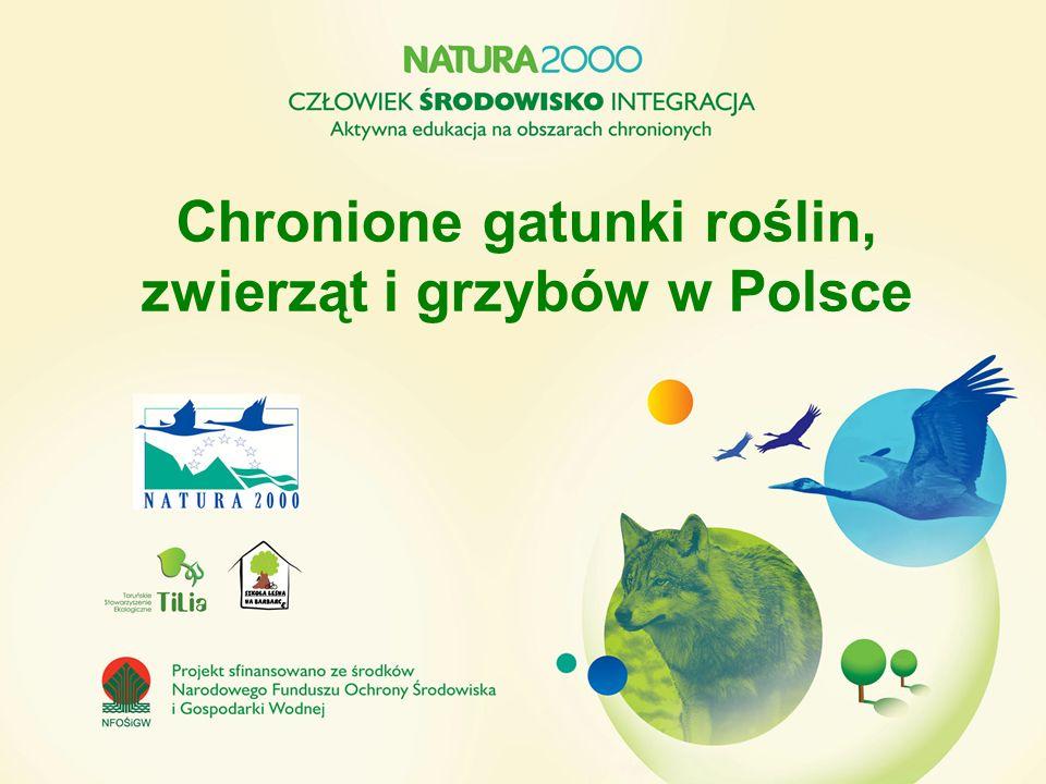 Chronione gatunki roślin, zwierząt i grzybów w Polsce
