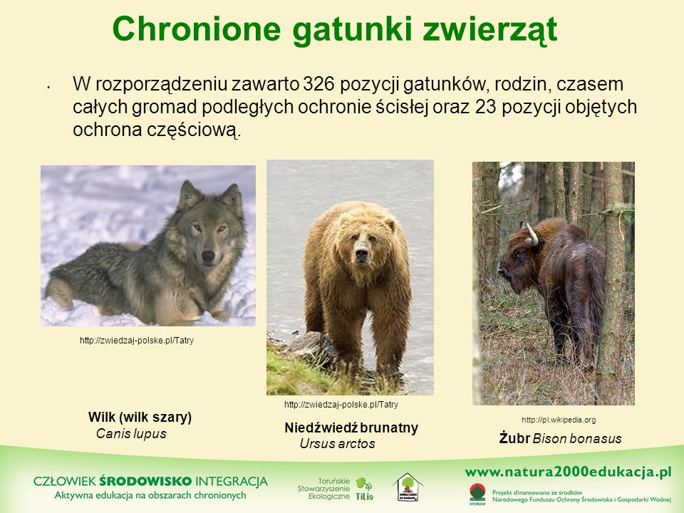 Chronione gatunki zwierząt W rozporządzeniu zawarto 326 pozycji gatunków, rodzin, czasem całych gromad podległych ochronie ścisłej oraz 23 pozycji obj