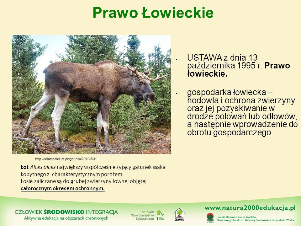 Prawo Łowieckie USTAWA z dnia 13 października 1995 r. Prawo łowieckie. gospodarka łowiecka – hodowla i ochrona zwierzyny oraz jej pozyskiwanie w drodz