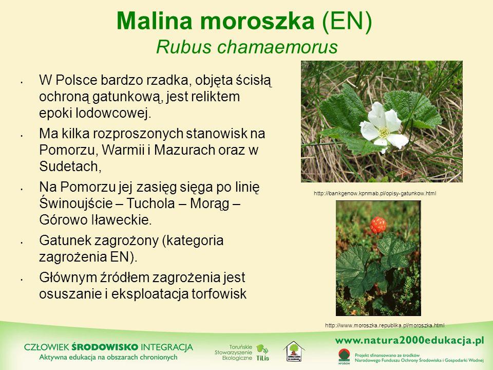 Malina moroszka (EN) Rubus chamaemorus W Polsce bardzo rzadka, objęta ścisłą ochroną gatunkową, jest reliktem epoki lodowcowej. Ma kilka rozproszonych
