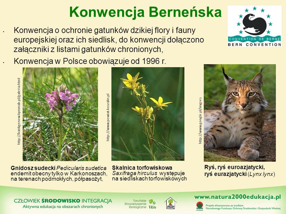 Konwencja Berneńska Konwencja o ochronie gatunków dzikiej flory i fauny europejskiej oraz ich siedlisk, do konwencji dołączono załączniki z listami ga