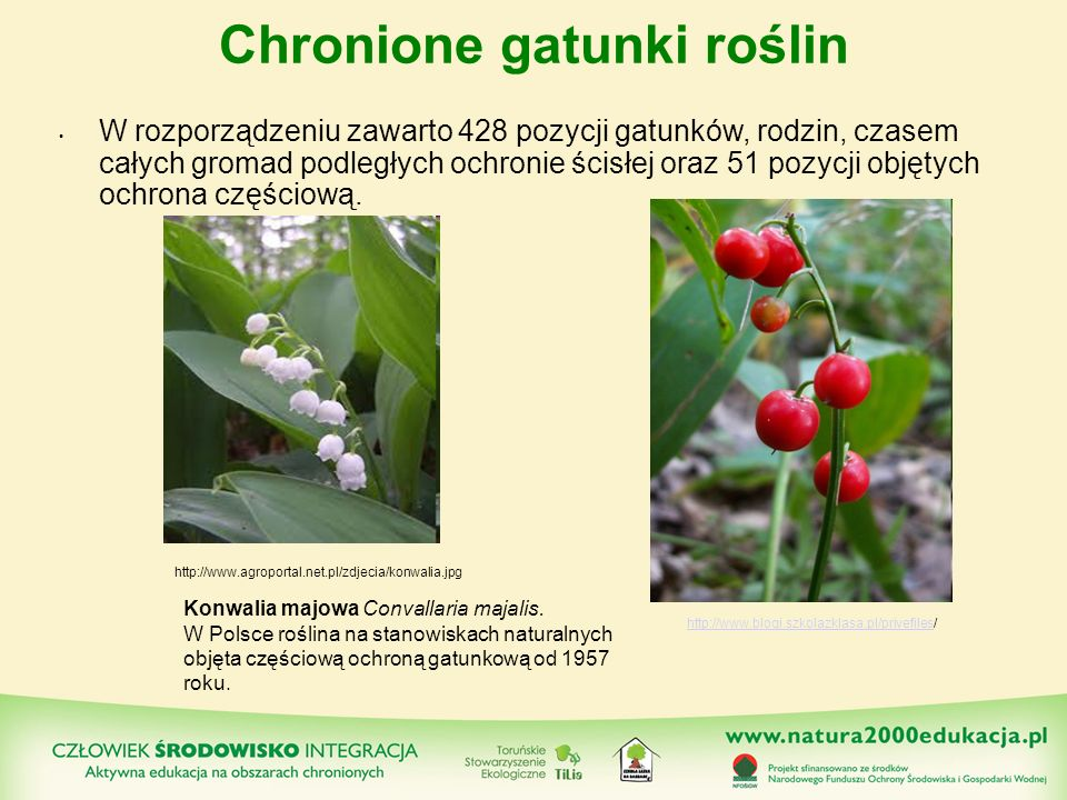 Chronione gatunki roślin W rozporządzeniu zawarto 428 pozycji gatunków, rodzin, czasem całych gromad podległych ochronie ścisłej oraz 51 pozycji objęt