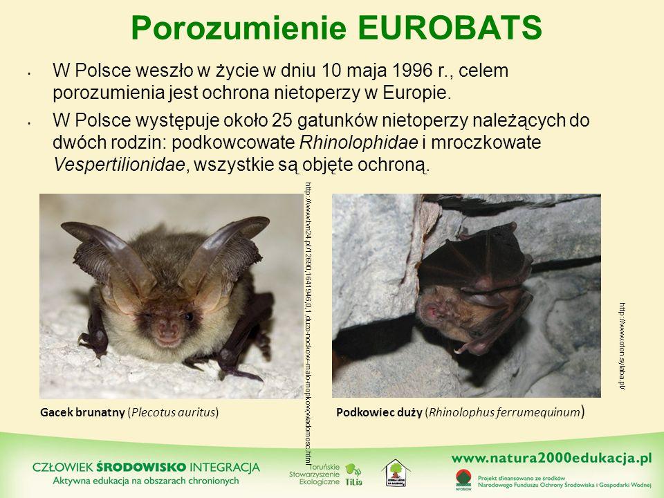 Porozumienie EUROBATS W Polsce weszło w życie w dniu 10 maja 1996 r., celem porozumienia jest ochrona nietoperzy w Europie. W Polsce występuje około 2