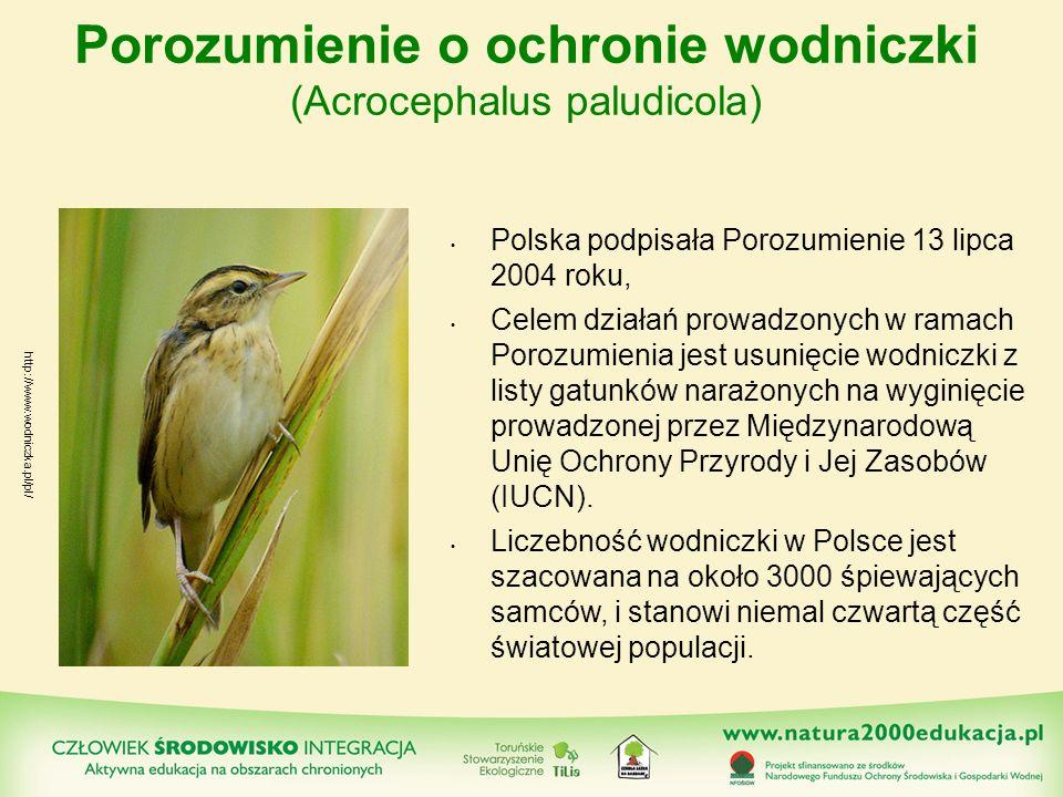 Porozumienie o ochronie wodniczki (Acrocephalus paludicola) Polska podpisała Porozumienie 13 lipca 2004 roku, Celem działań prowadzonych w ramach Poro