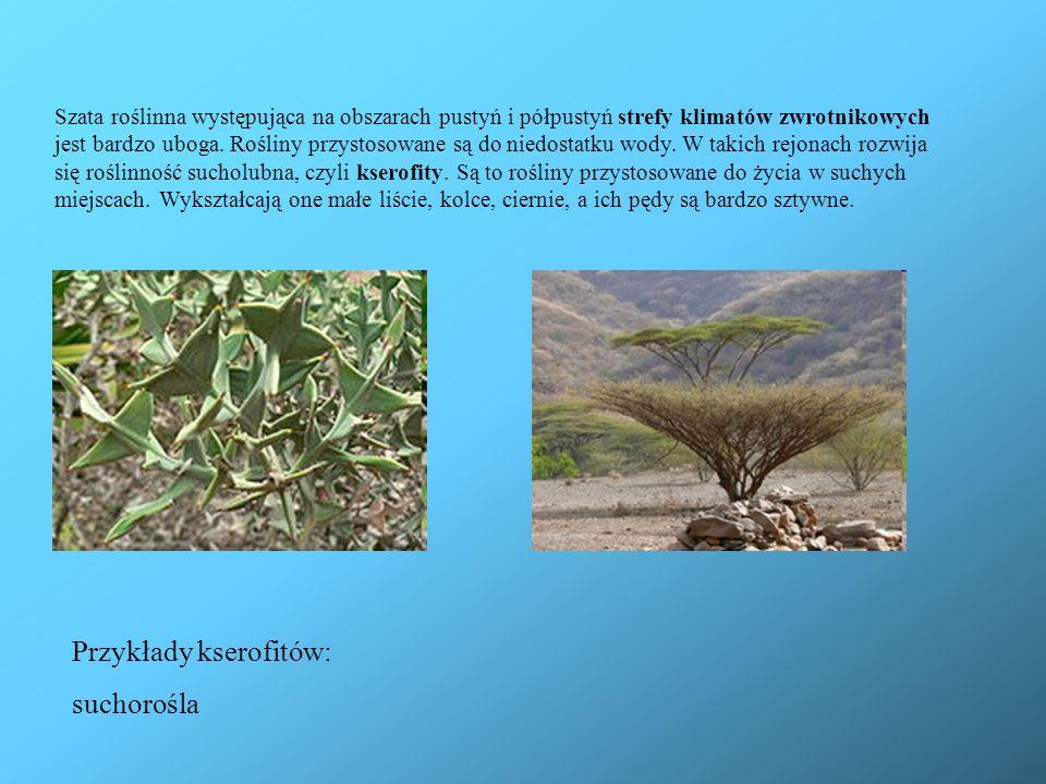 Szata roślinna występująca na obszarach pustyń i półpustyń strefy klimatów zwrotnikowych jest bardzo uboga. Rośliny przystosowane są do niedostatku wo