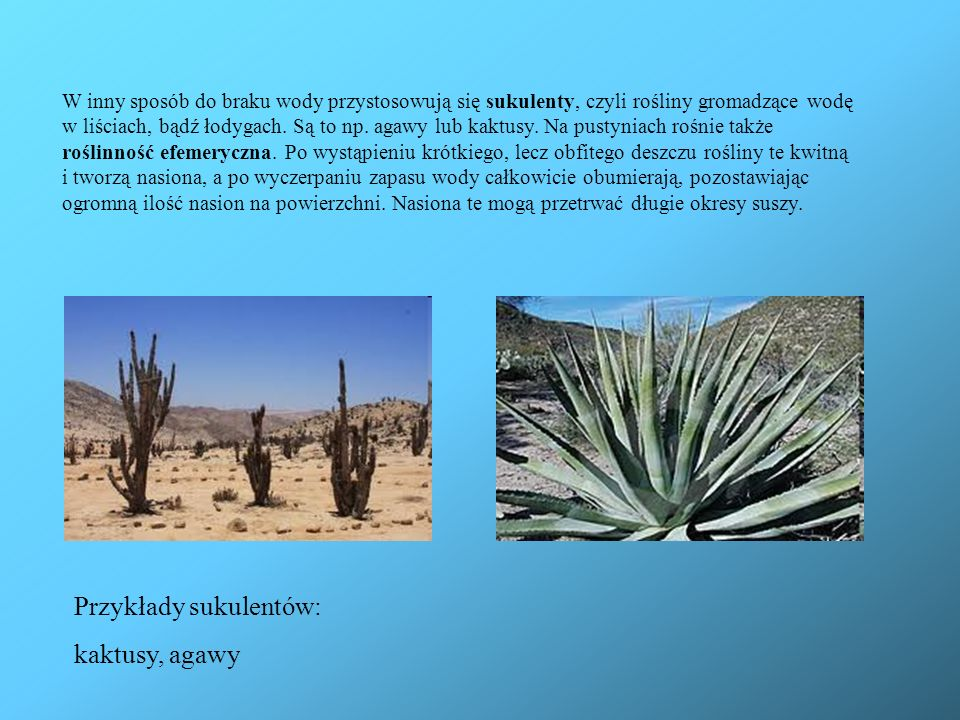 W inny sposób do braku wody przystosowują się sukulenty, czyli rośliny gromadzące wodę w liściach, bądź łodygach. Są to np. agawy lub kaktusy. Na pust