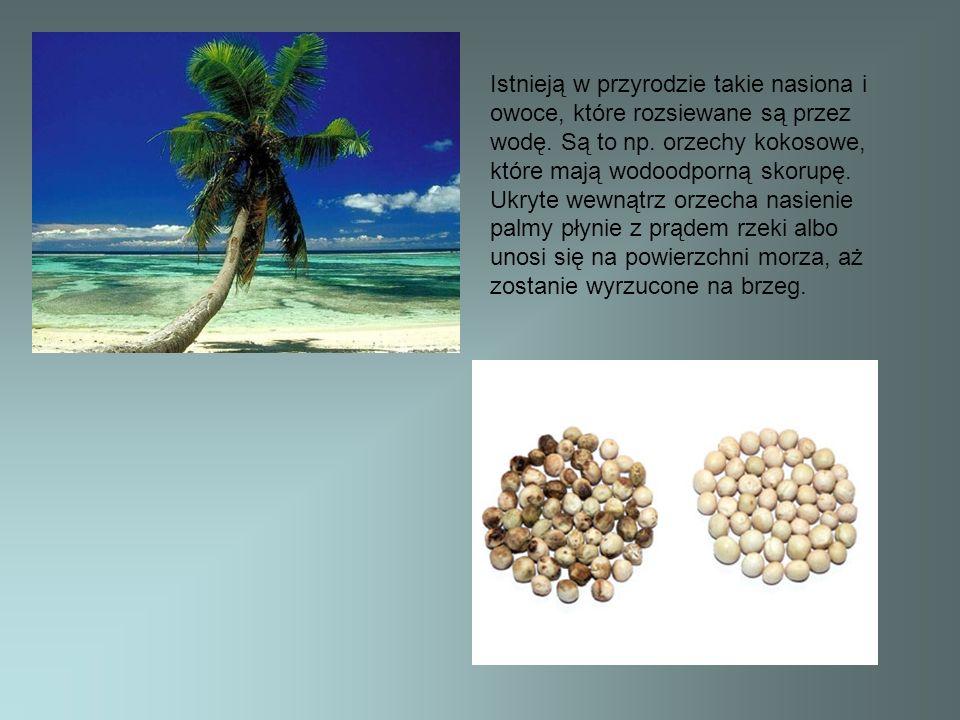 Istnieją w przyrodzie takie nasiona i owoce, które rozsiewane są przez wodę. Są to np. orzechy kokosowe, które mają wodoodporną skorupę. Ukryte wewnąt
