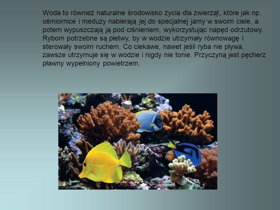 Woda to również naturalne środowisko życia dla zwierząt, które jak np. ośmiornice i meduzy nabierają jej do specjalnej jamy w swoim ciele, a potem wyp