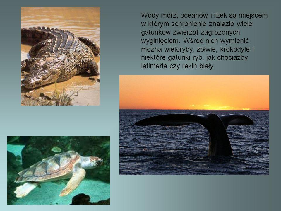 Wody mórz, oceanów i rzek są miejscem w którym schronienie znalazło wiele gatunków zwierząt zagrożonych wyginięciem. Wśród nich wymienić można wielory