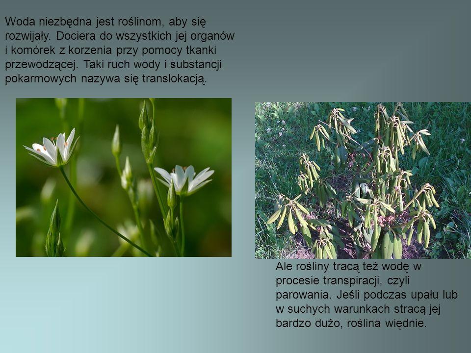 Istnieją w przyrodzie takie nasiona i owoce, które rozsiewane są przez wodę.
