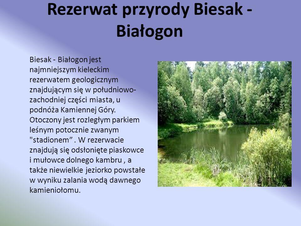 Rezerwat przyrody Biesak - Białogon Biesak - Białogon jest najmniejszym kieleckim rezerwatem geologicznym znajdującym się w południowo- zachodniej czę
