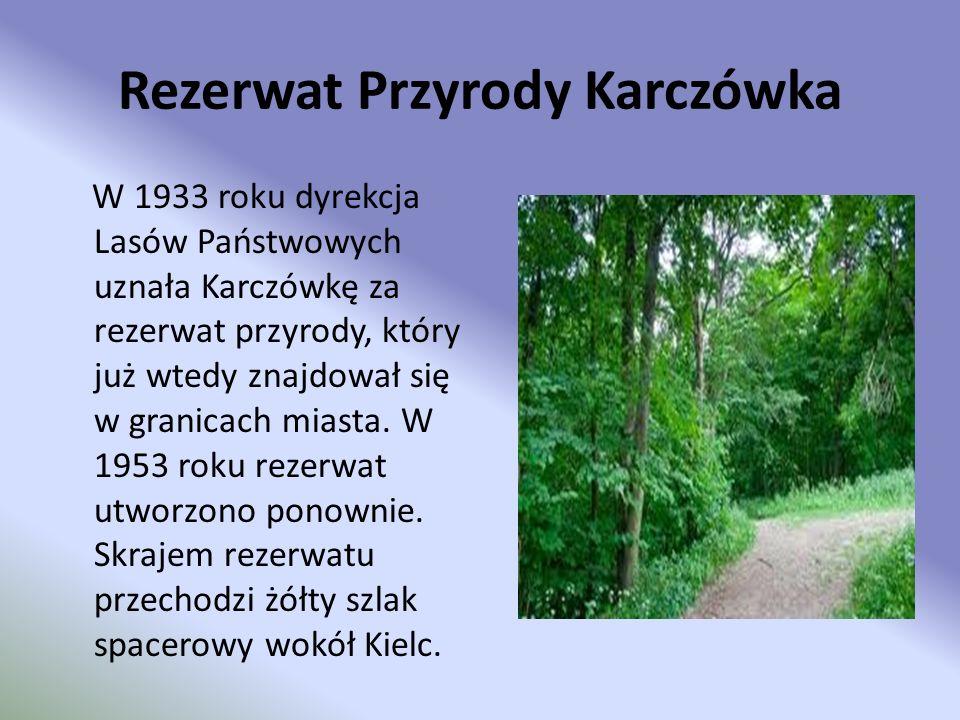 Rezerwat Przyrody Karczówka W 1933 roku dyrekcja Lasów Państwowych uznała Karczówkę za rezerwat przyrody, który już wtedy znajdował się w granicach mi