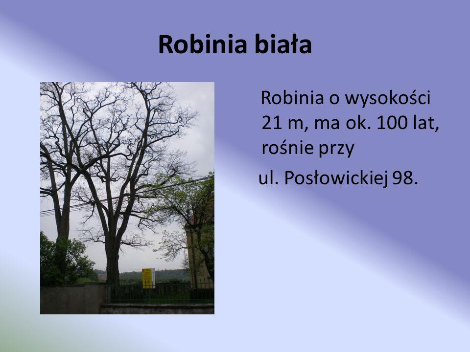 Robinia biała Robinia o wysokości 21 m, ma ok. 100 lat, rośnie przy ul. Posłowickiej 98.