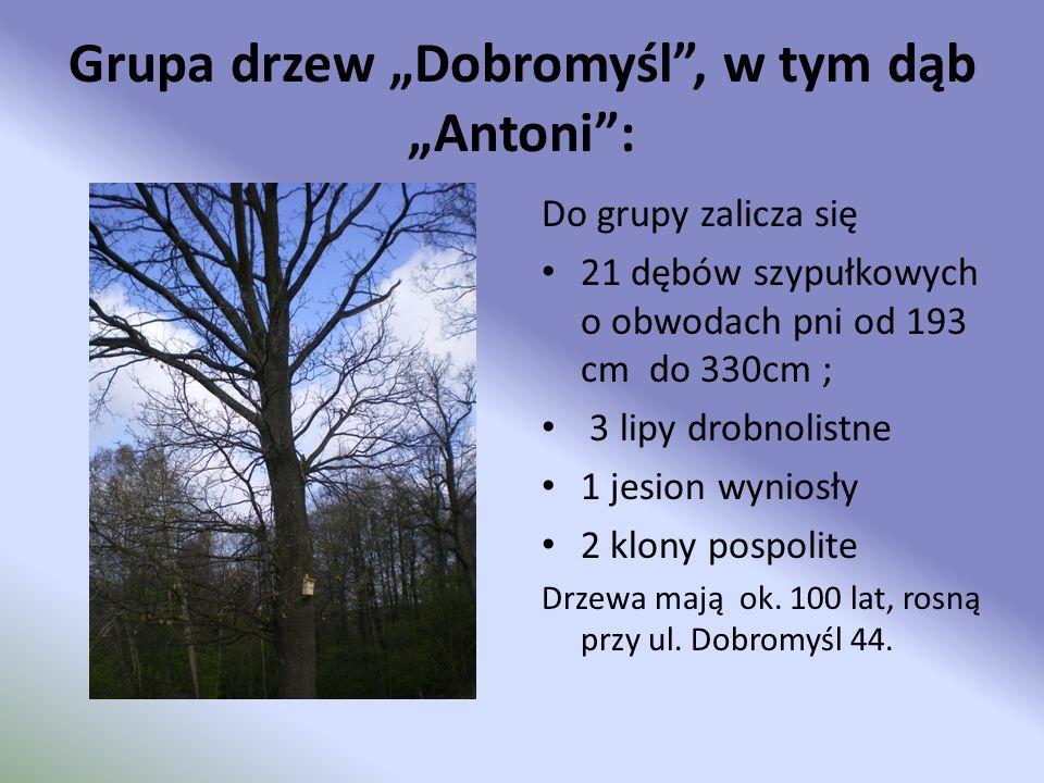 Grupa drzew Dobromyśl, w tym dąb Antoni: Do grupy zalicza się 21 dębów szypułkowych o obwodach pni od 193 cm do 330cm ; 3 lipy drobnolistne 1 jesion w