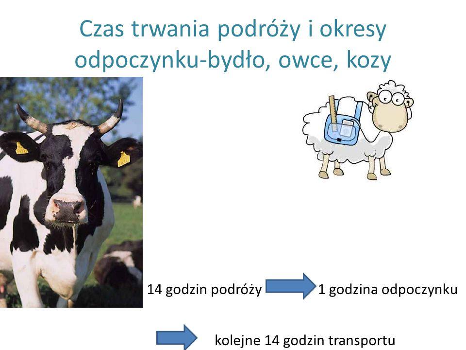 Czas trwania podróży i okresy odpoczynku-bydło, owce, kozy 14 godzin podróży1 godzina odpoczynku kolejne 14 godzin transportu