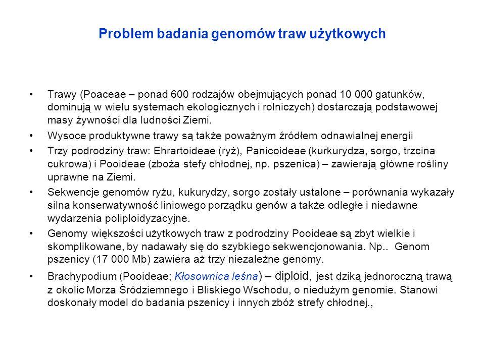 Problem badania genomów traw użytkowych Trawy (Poaceae – ponad 600 rodzajów obejmujących ponad 10 000 gatunków, dominują w wielu systemach ekologiczny
