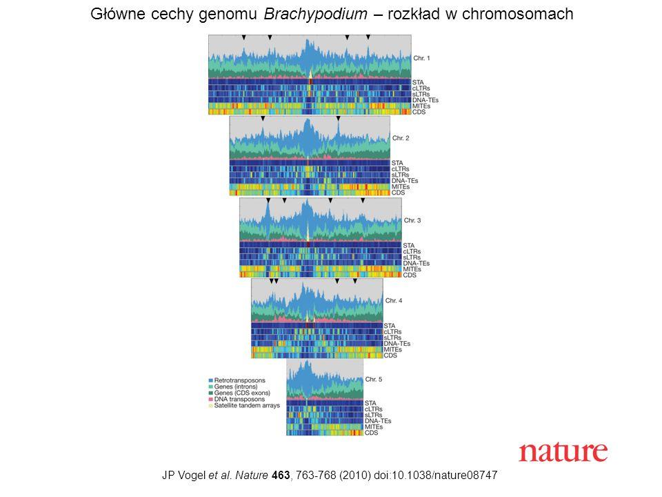 JP Vogel et al. Nature 463, 763-768 (2010) doi:10.1038/nature08747 Główne cechy genomu Brachypodium – rozkład w chromosomach