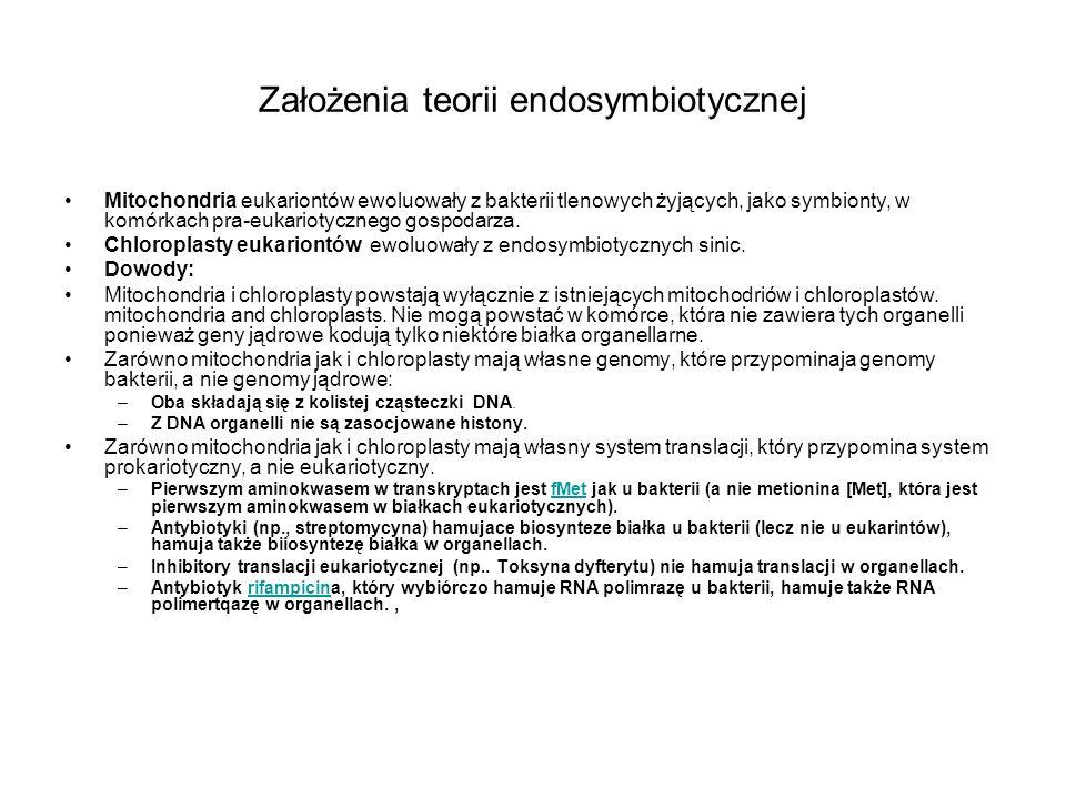 Założenia teorii endosymbiotycznej Mitochondria eukariontów ewoluowały z bakterii tlenowych żyjących, jako symbionty, w komórkach pra-eukariotycznego