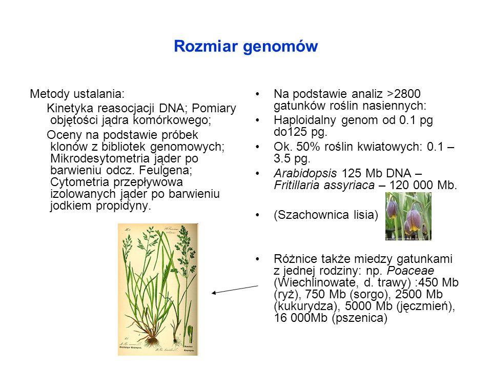 Rozmiar genomów Metody ustalania: Kinetyka reasocjacji DNA; Pomiary objętości jądra komórkowego; Oceny na podstawie próbek klonów z bibliotek genomowy