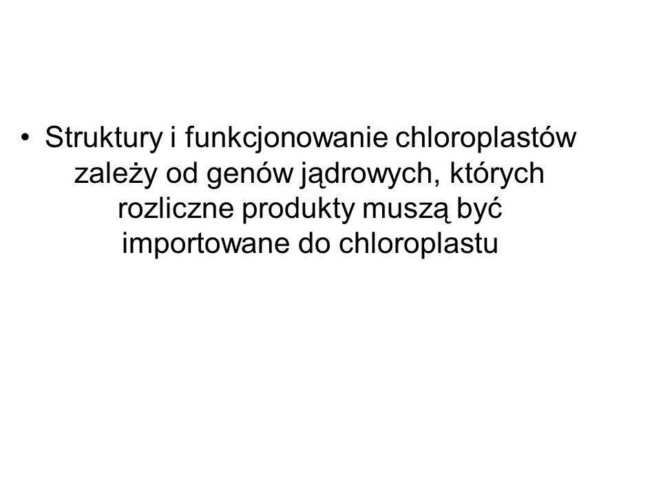 Struktury i funkcjonowanie chloroplastów zależy od genów jądrowych, których rozliczne produkty muszą być importowane do chloroplastu