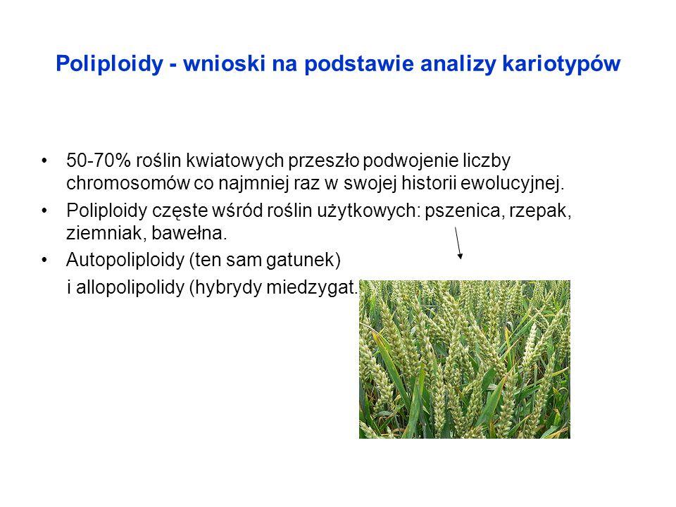 Poliploidy - wnioski na podstawie analizy kariotypów 50-70% roślin kwiatowych przeszło podwojenie liczby chromosomów co najmniej raz w swojej historii