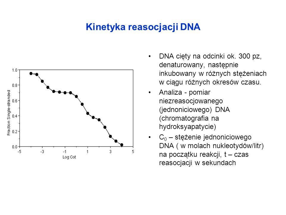 Kinetyka reasocjacji DNA DNA cięty na odcinki ok. 300 pz, denaturowany, następnie inkubowany w różnych stężeniach w ciągu różnych okresów czasu. Anali