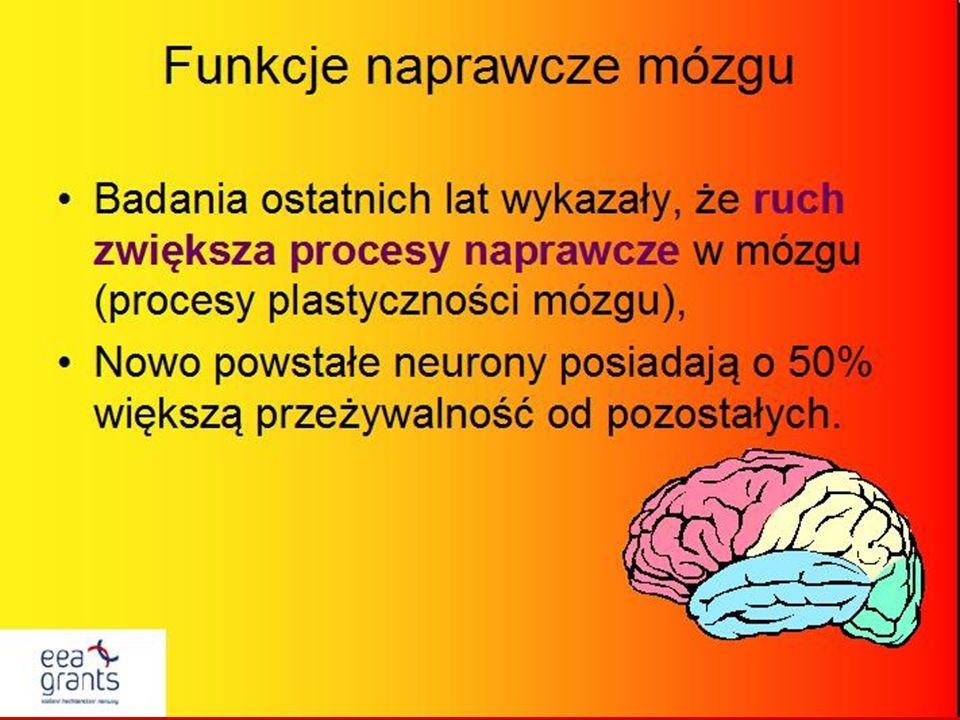Stymulacja polisensoryczna pobudzenie izolowanych obszarów mózgu, jednoczesna stymulacja wielu zmysłów – wzroku, słuchu, smaku, węchu i dotyku, pobudzanie neuronów do aktywności – co prowadzi do utrwalania istniejących i tworzenia nowych połączeń między neuronami, integracja wrażeń zmysłowych,