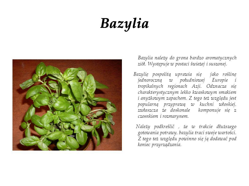 Bazylia Bazylia należy do grona bardzo aromatycznych ziół. Występuje w postaci świeżej i suszonej. Bazylię pospolitą uprawia się jako roślinę jednoroc