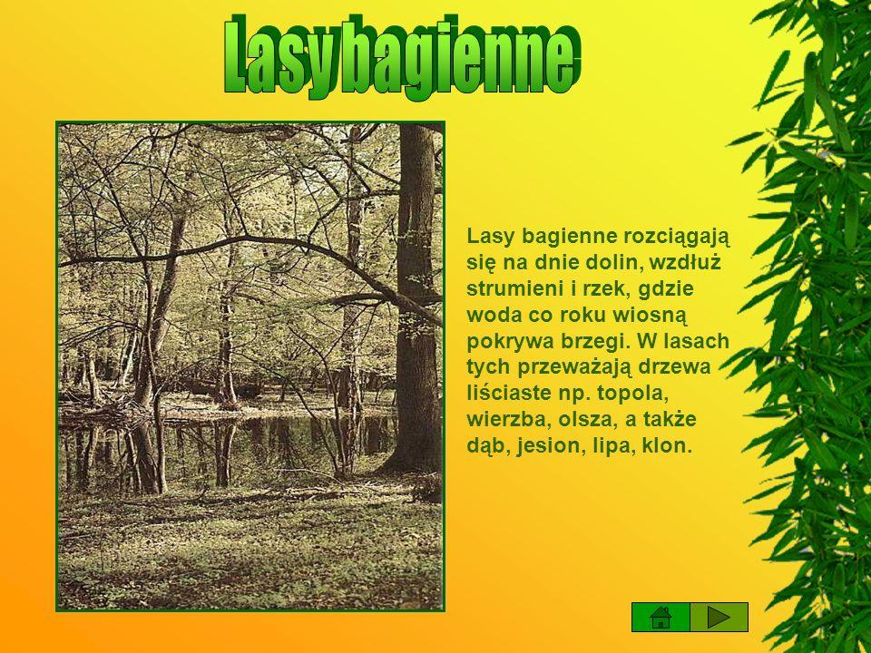 Lasy liściaste rosną zwykle na glebach średnio urodzajnych z drzewami takimi jak: dęby, brzozy, buki.