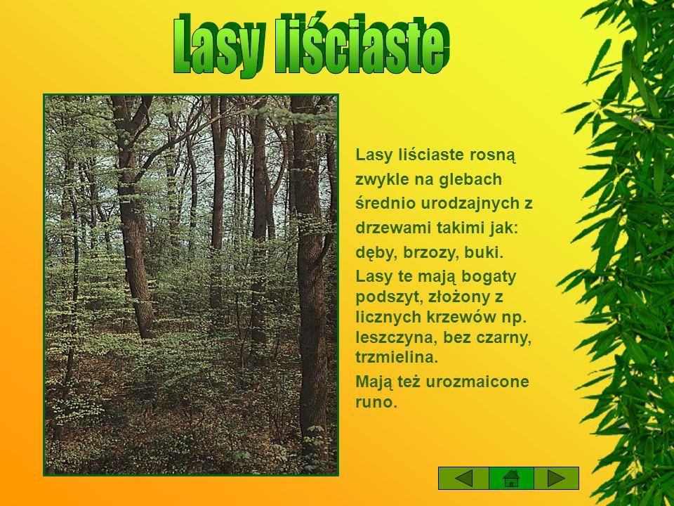 Lasy sosnowe rosną głównie na glebach piaszczystych, torfowiskach, glebach kamienistych oraz w dolinach gór.
