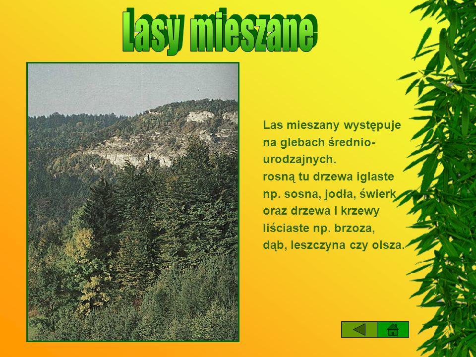 Korony drzew Najwyższą szczytową warstwę zatrzymującą najwięcej światła, tworzą korony najwyższych drzew.