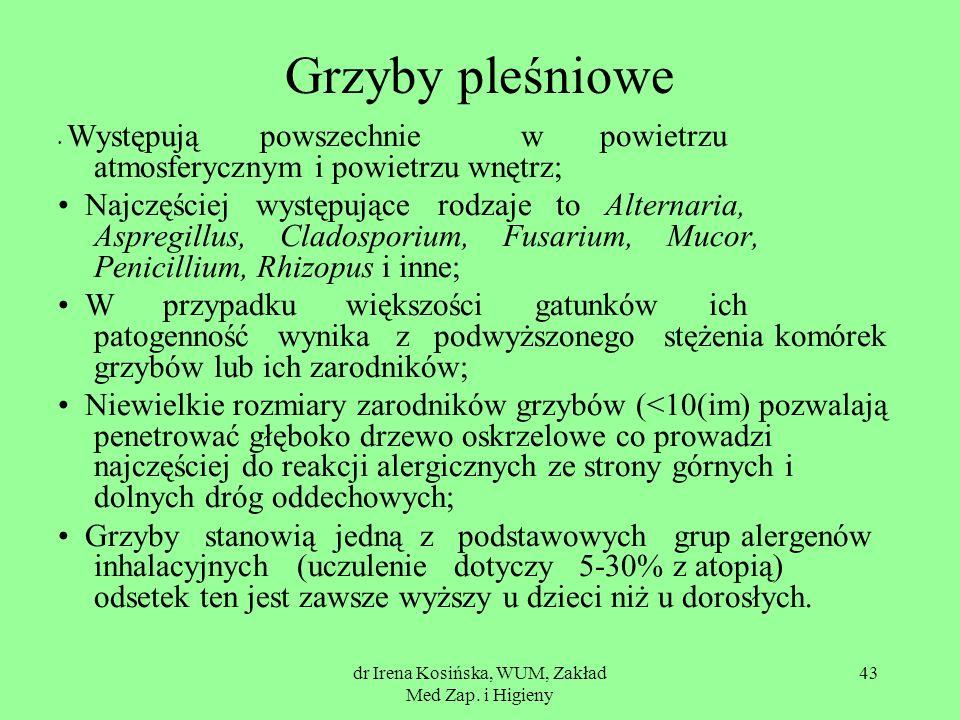 dr Irena Kosińska, WUM, Zakład Med Zap. i Higieny 43 Grzyby pleśniowe Występują powszechnie w powietrzu atmosferycznym i powietrzu wnętrz; Najczęściej