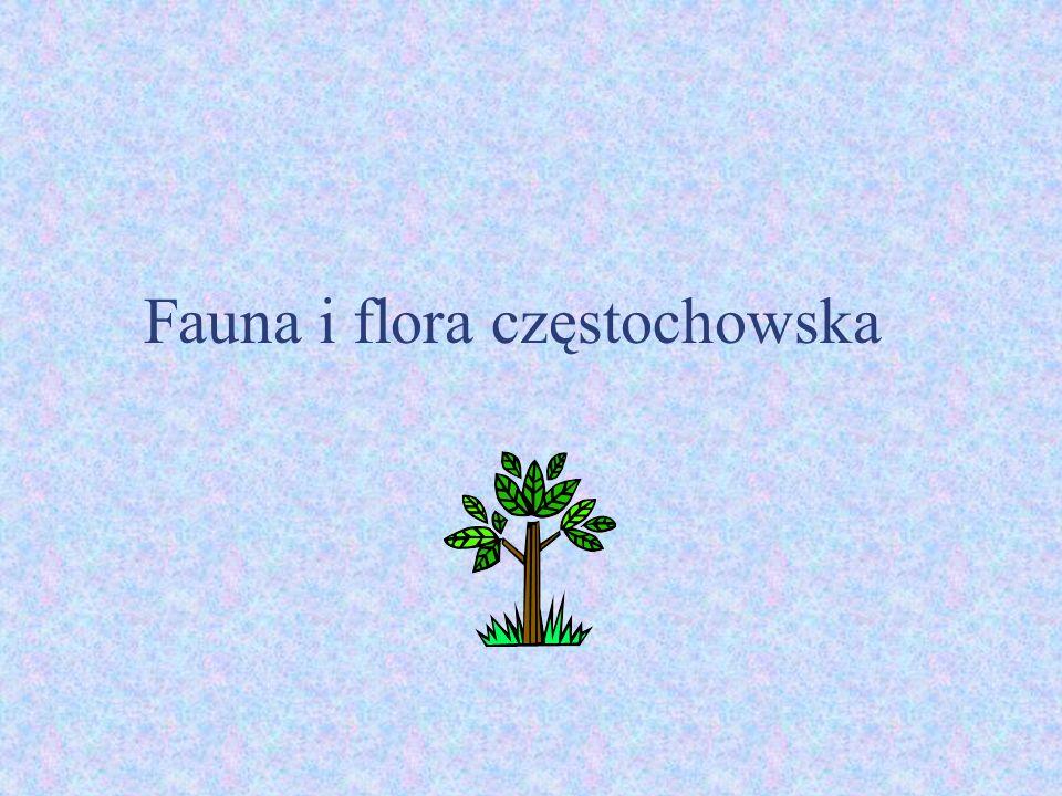 Fauna i flora częstochowska