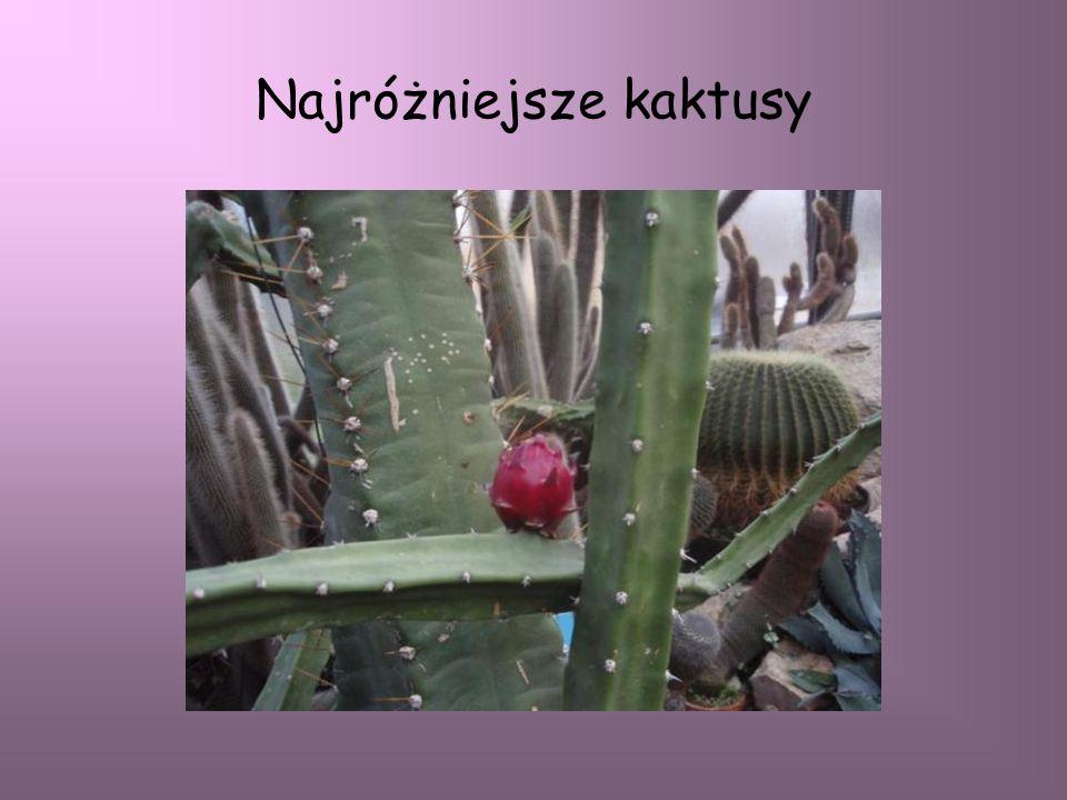 Najróżniejsze kaktusy