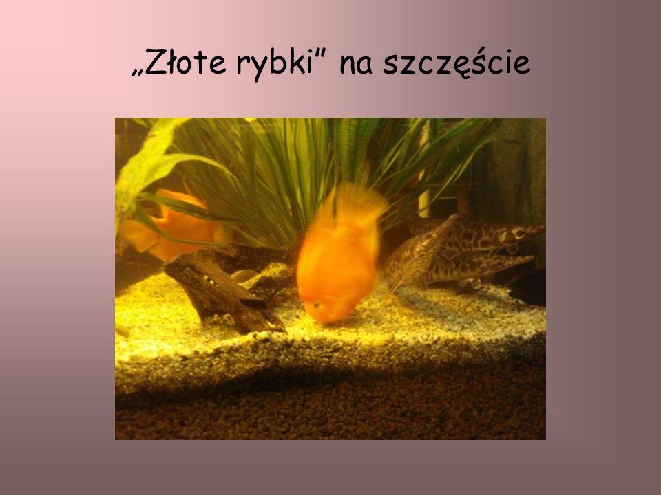 Złote rybki na szczęście