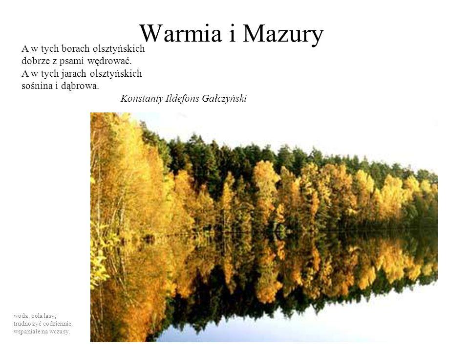Warmia i Mazury A w tych borach olsztyńskich dobrze z psami wędrować.