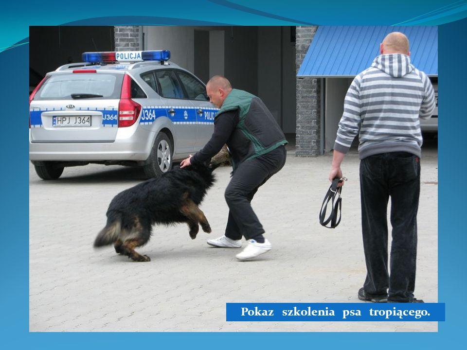 Pokaz szkolenia psa tropiącego.