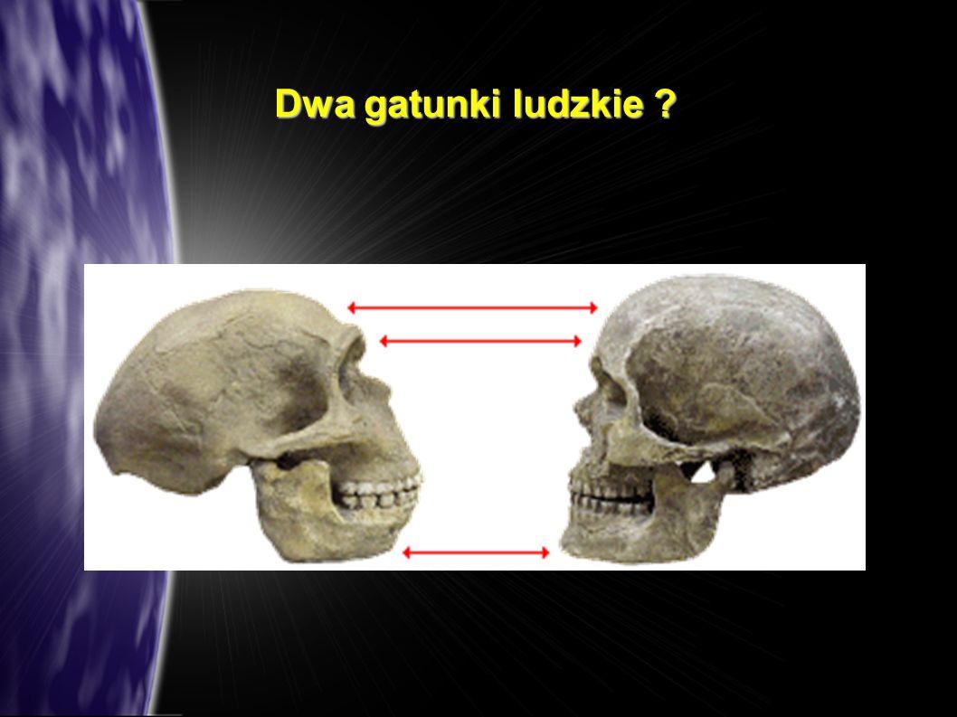 Dwa gatunki ludzkie ?