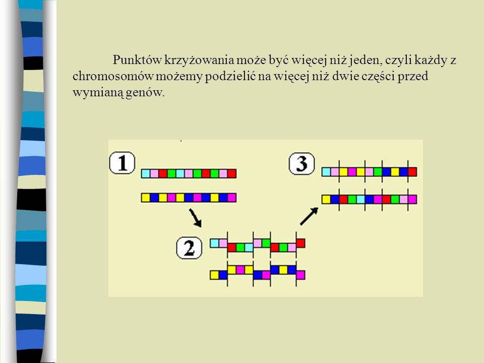 Punktów krzyżowania może być więcej niż jeden, czyli każdy z chromosomów możemy podzielić na więcej niż dwie części przed wymianą genów.