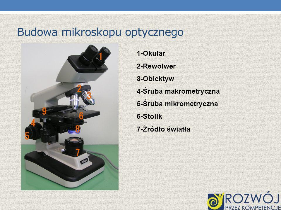 OBLICZANIE POWIĘKSZENIA MIKROSKOPU Powiększenie jakie daje mikroskop zależy od powiększenia obiektywu i okularu, i stanowi iloczyn powiększeń tych dwóch części optycznych.