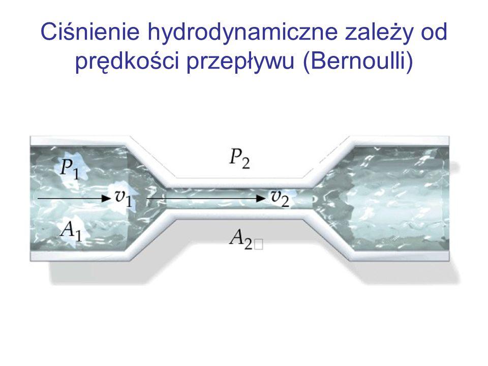 Ciśnienie hydrodynamiczne zależy od prędkości przepływu (Bernoulli)