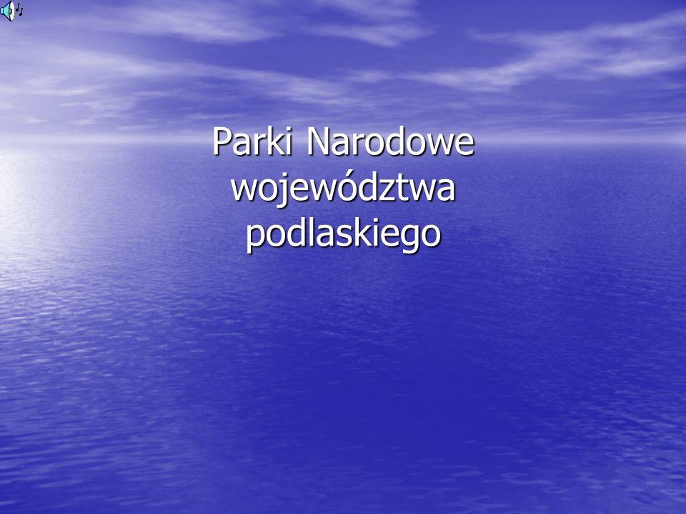 Białowieski Park Narodowy Puszcza Białowieska jest ostatnim naturalnym lasem nizinnym – perłą wśród puszcz Europy.