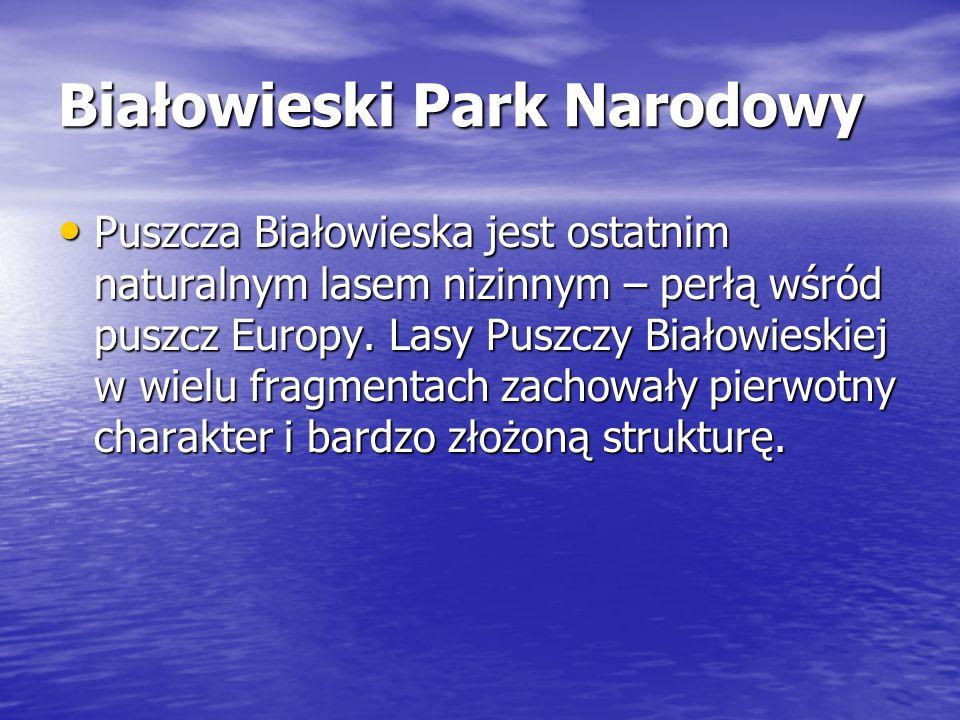 Białowieski Park Narodowy Puszcza Białowieska jest ostatnim naturalnym lasem nizinnym – perłą wśród puszcz Europy. Lasy Puszczy Białowieskiej w wielu