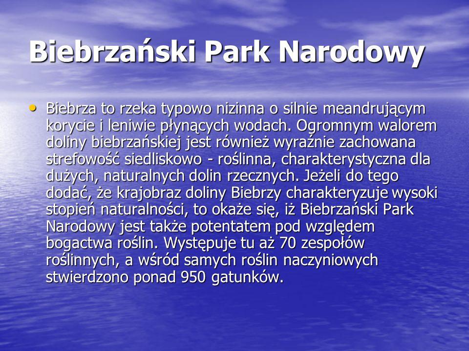 Biebrzański Park Narodowy Biebrza to rzeka typowo nizinna o silnie meandrującym korycie i leniwie płynących wodach. Ogromnym walorem doliny biebrzańsk